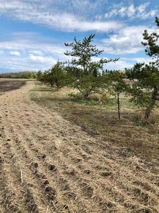 Photo 12: RR 255 & HWY 37: Rural Sturgeon County Rural Land/Vacant Lot for sale : MLS®# E4244134