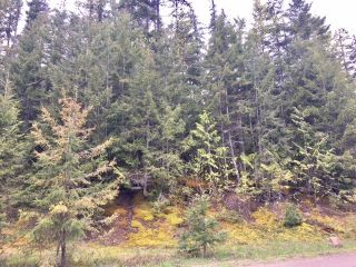 Photo 5: 3,4,6 Armstrong Road in Eagle Bay: Vacant Land for sale : MLS®# 10133907