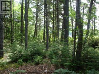 Photo 14: Lot 11 RAFUSE POINT Road in Pleasantville: Vacant Land for sale : MLS®# 202122075
