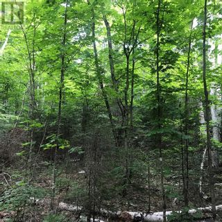 Photo 21: 0 OTTAWA Avenue in South River: Vacant Land for sale : MLS®# 40156406