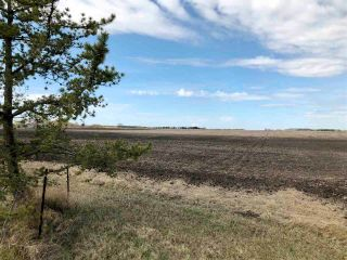Photo 17: RR 255 & HWY 37: Rural Sturgeon County Rural Land/Vacant Lot for sale : MLS®# E4244134