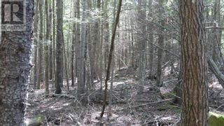 Photo 6: Lot 9 Madashak Road in Middle New Cornwall: Vacant Land for sale : MLS®# 202113818