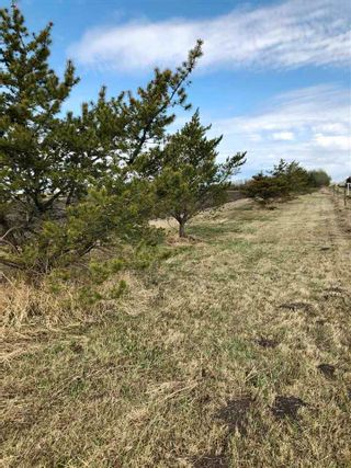 Photo 15: RR 255 & HWY 37: Rural Sturgeon County Rural Land/Vacant Lot for sale : MLS®# E4244134