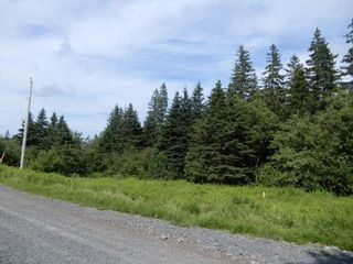Photo 9: 299 New Lairg Road in New Lairg: 108-Rural Pictou County Vacant Land for sale (Northern Region)  : MLS®# 202117815