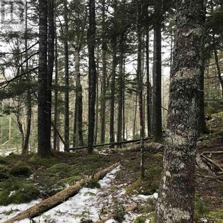 Photo 3: Lot 14 Tupper Lake in Westfield: Vacant Land for sale : MLS®# 202110832
