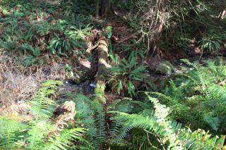 Photo 8: 5852 MARINE Way in Sechelt: Sechelt District Land for sale (Sunshine Coast)  : MLS®# R2545877