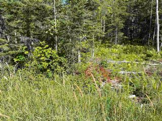 Photo 2: Lot 21-2 Alma Road in Loch Broom: 108-Rural Pictou County Vacant Land for sale (Northern Region)  : MLS®# 202120252