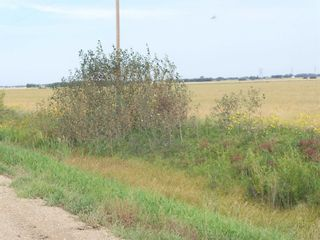 Photo 2: TWP 551 RR 234: Rural Sturgeon County Rural Land/Vacant Lot for sale : MLS®# E4245373