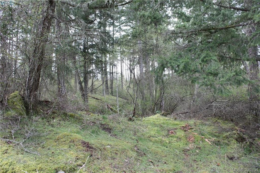 Photo 10: Photos: 414 Stewart Rd in SALT SPRING ISLAND: GI Salt Spring Land for sale (Gulf Islands)  : MLS®# 784416