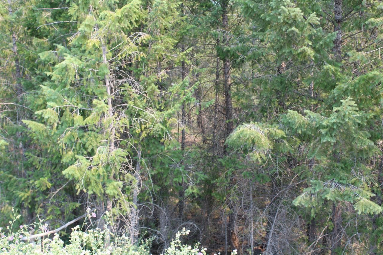 Main Photo: Lot 22 COPPER POINT WAY in Windermere: Vacant Land for sale : MLS®# 2460138
