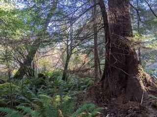 Photo 19: LT 189 Ellenor Rd in : CV Comox Peninsula Land for sale (Comox Valley)  : MLS®# 858998