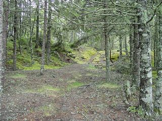 Photo 13: 0 Moshers Island Road in LaHave River: 405-Lunenburg County Vacant Land for sale (South Shore)  : MLS®# 202111805