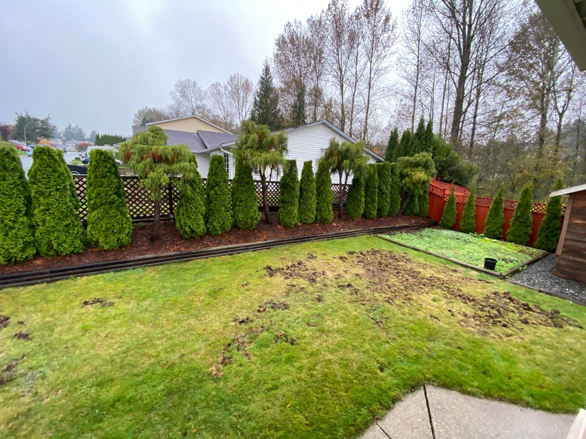 Photo 14: Photos: Upper 3293 Horn St. in Abbotsford: Central Abbotsford House for rent