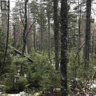 Photo 6: Lot 14 Tupper Lake in Westfield: Vacant Land for sale : MLS®# 202110832