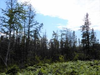 Photo 6: Battist Road in Sundridge: 108-Rural Pictou County Vacant Land for sale (Northern Region)  : MLS®# 202119320