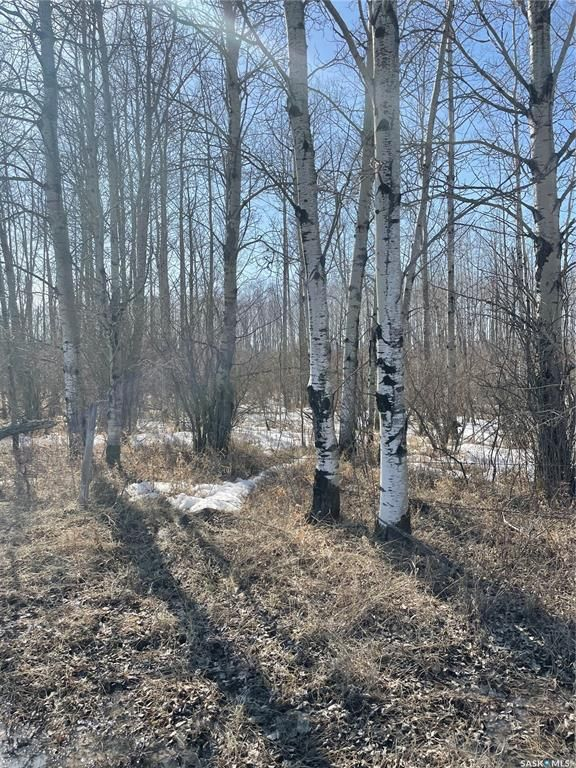 Main Photo: 65 acres land in Preeceville: Lot/Land for sale : MLS®# SK848653