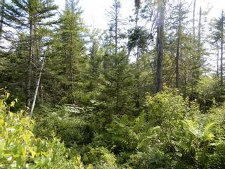 Photo 3: Battist Road in Sundridge: 108-Rural Pictou County Vacant Land for sale (Northern Region)  : MLS®# 202119320