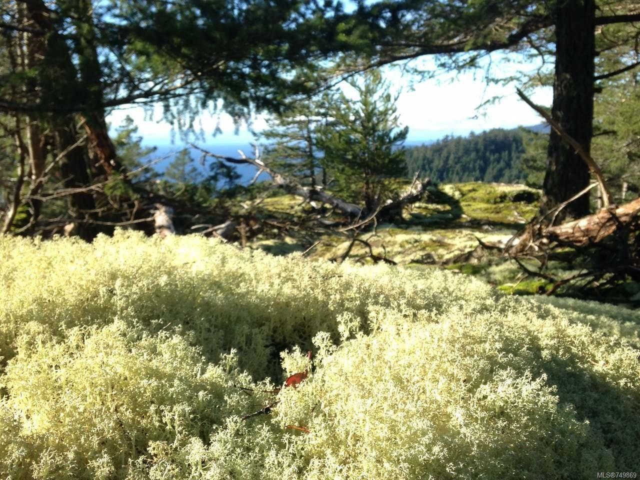 Photo 19: Photos: LT 2 Lakota Rd in LASQUETI ISLAND: Isl Lasqueti Island Land for sale (Islands)  : MLS®# 749869