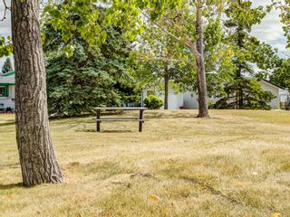 Photo 50: 44 MAITLAND Green NE in Calgary: Marlborough Park Detached for sale : MLS®# A1030134