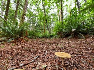 Photo 37: Lot 2 Eagles Dr in : CV Courtenay North Land for sale (Comox Valley)  : MLS®# 869395