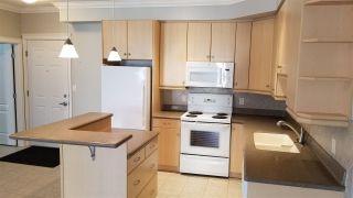 Photo 6: 313 10116 80 Avenue in Edmonton: Zone 17 Condo for sale : MLS®# E4229427