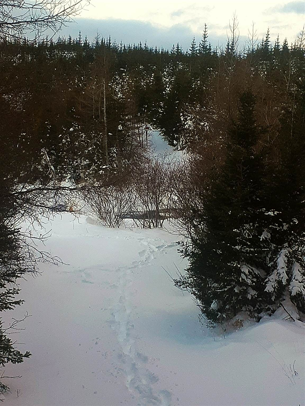 Main Photo: 0 Louisbourg Highway in Louisbourg: 207-C. B. County Vacant Land for sale (Cape Breton)  : MLS®# 202102405