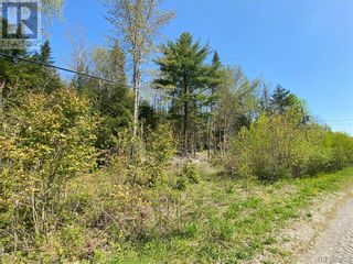 Photo 9: 5264 Rte 770 in Rollingdam: Vacant Land for sale : MLS®# NB058269