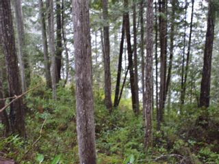 Photo 13: 1309 Gorge Harbour Rd in : Isl Cortes Island Land for sale (Islands)  : MLS®# 868715