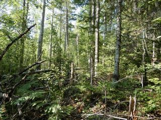 Photo 2: Watt Road in Hedgeville: 108-Rural Pictou County Vacant Land for sale (Northern Region)  : MLS®# 202122216