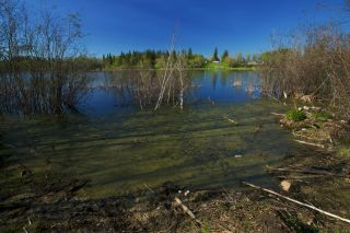 Photo 8: RR 21 TWP 565A Lake Nakamun: Rural Lac Ste. Anne County Rural Land/Vacant Lot for sale : MLS®# E4246330