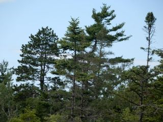 Photo 1: Battist Road in Sundridge: 108-Rural Pictou County Vacant Land for sale (Northern Region)  : MLS®# 202119320
