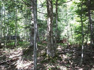 Photo 9: Meiklefield Road in Meiklefield: 108-Rural Pictou County Vacant Land for sale (Northern Region)  : MLS®# 202117504