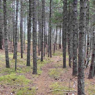 Photo 22: Vacant Land Highway 331 in West Lahave: 405-Lunenburg County Vacant Land for sale (South Shore)  : MLS®# 202111160