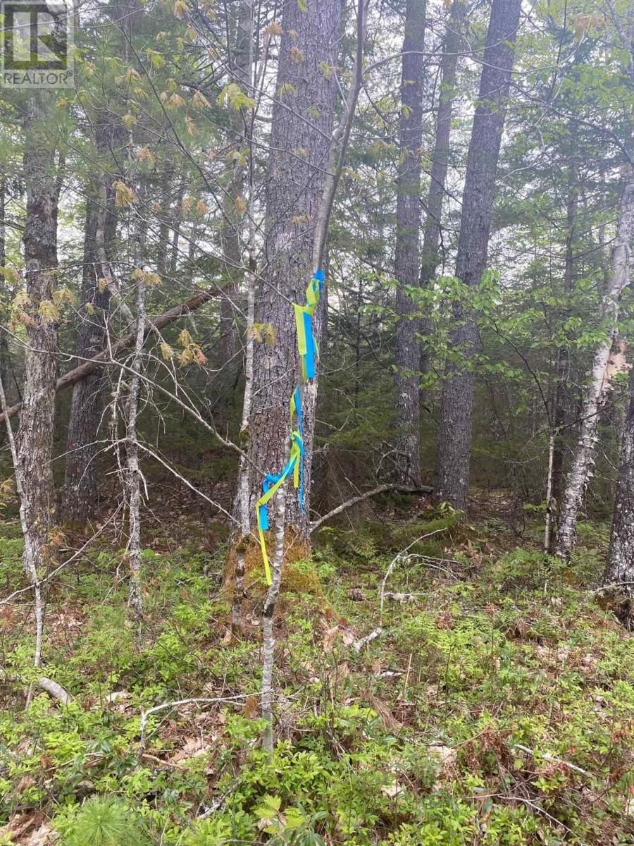 Main Photo: West Caledonia in Whiteburn Mines: Vacant Land for sale : MLS®# 202112919