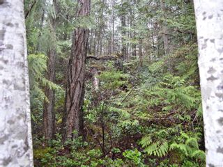Photo 4: 1309 Gorge Harbour Rd in : Isl Cortes Island Land for sale (Islands)  : MLS®# 868715