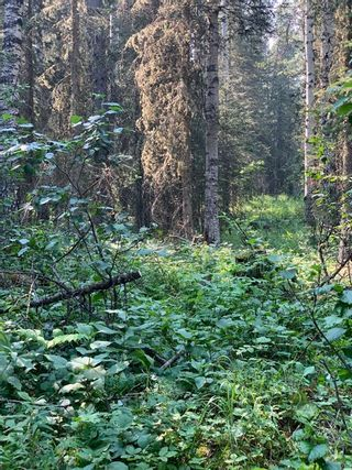 Photo 29: .. None: Bragg Creek Residential Land for sale : MLS®# A1131758
