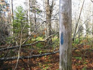 Photo 10: Lot Highway 107 in West Petpeswick: 35-Halifax County East Vacant Land for sale (Halifax-Dartmouth)  : MLS®# 202114068