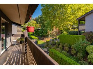 """Photo 29: 1626 34909 OLD YALE Road in Abbotsford: Abbotsford East Townhouse for sale in """"THE GARDENS"""" : MLS®# R2465342"""