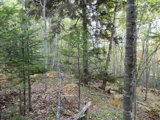 Photo 15: Tanner Hill Road in Limerock: 108-Rural Pictou County Vacant Land for sale (Northern Region)  : MLS®# 202121301
