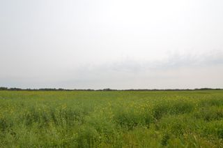 Photo 5: Range Rd 180 & Township Rd 553: Rural Lamont County Rural Land/Vacant Lot for sale : MLS®# E4258170