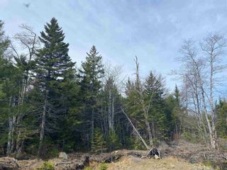 Photo 20: Lots Hectanooga Road in Mayflower: 401-Digby County Vacant Land for sale (Annapolis Valley)  : MLS®# 202118142