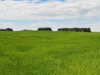 Photo 15: Range Road 41: Rural Mountain View County House for sale : MLS®# C3641299