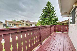 Photo 45: 155 Templevale Road NE in Calgary: Temple Detached for sale : MLS®# A1119165