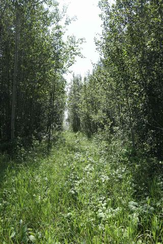 Photo 7: TWP 494 RR 42: Rural Leduc County Rural Land/Vacant Lot for sale : MLS®# E4252228
