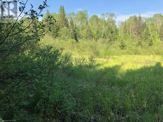 Photo 19: N/A RANEY Road E in Sundridge: Vacant Land for sale : MLS®# 40129602