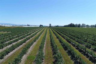 Photo 6: 27.28AC 4 Avenue in Langley: Land for sale : MLS®# R2362643