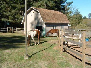 Photo 8: 3282 MACAULAY ROAD in BLACK CREEK: CV Merville Black Creek House for sale (Comox Valley)  : MLS®# 753672
