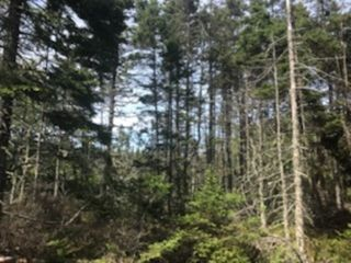 Photo 5: 217 Highway in Central Grove: 401-Digby County Vacant Land for sale (Annapolis Valley)  : MLS®# 202001807
