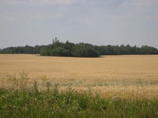 Photo 8: SE 20 30 1 W5 Highway 2A: Carstairs Residential Land for sale : MLS®# A1067588