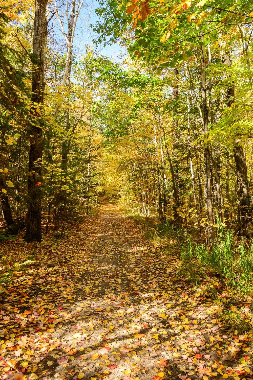 Photo 3: Photos: 1025 Harrison Island in : Archipelago Freehold for sale (Parry Sound)